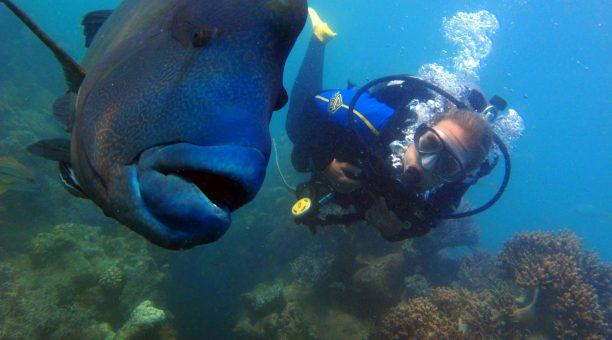 Dive with some amazing Marine Life - like this Maori Wrasse
