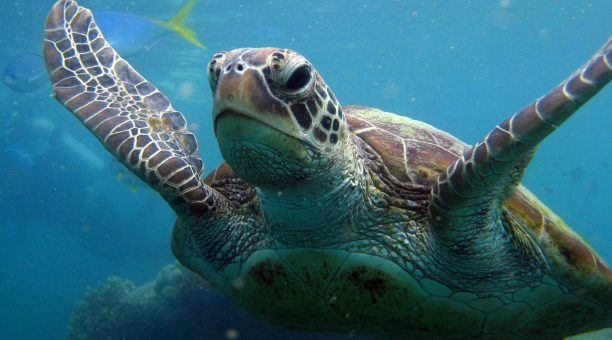 Get up close to some amazing Reef Life such as Turtles!